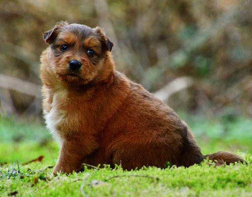 allqucha wira perrito gordo quechua