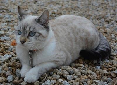 malta misi gato mediano quechua