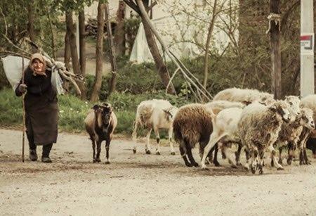 mama chita michiy lluqsiy madre oveja pastar salir quechua