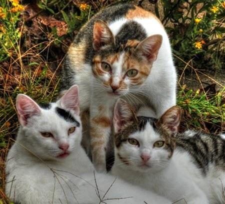 misikuna gatos quechua