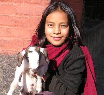 warmi warma chita nina con oveja quechua